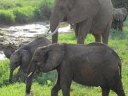 Mikrohabitate: Leben in einem Fußabdruck: Wie Elefanten-Spuren der Umwelt nutzen