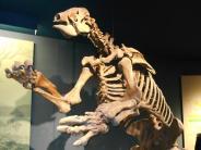 Proteinmessungen belegen: Studie: Riesenfaultiere haben sich vegetarisch ernährt