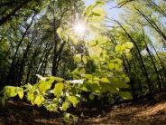 Im globalenVergleich: Wenig Vielfalt im deutschen Wald