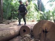 Zerstörte Natur: Kahlschlag im Amazonas? Studie sieht Gefahr fürSchutzzonen