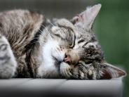 Karrierestart als Mäusejäger: Wie Hauskatzen Europa eroberten