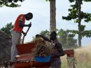 Exportschlager: «Superfood» Chia:Auch afrikanische Bauern steigen um