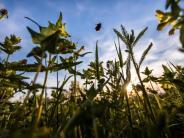 Studie: Insektensterben: Datenauswertung bestätigt negative Entwicklung