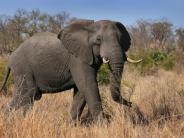 News-Blog: Trump legt Einfuhrgenehmigung für Elefantentrophäen doch wieder auf Eis