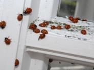 Insekten-WG: Wie Krabbeltiere und Menschen zusammenleben