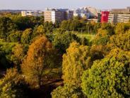Weltweites Phänomen: Stadtbäume wachsen weltweit schneller