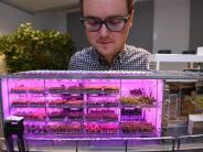 Neuartiges Gewächshaus: Gärtner im Eis: «Ich habe einen normal grünen Daumen»
