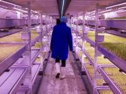"London: ""Vertical Farming"": Kräuterzucht im Weltkriegsbunker"