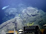 In rund 1650 Metern Tiefe: Galapagos-Rochen nutzen warme Tiefseequellen für ihre Brut