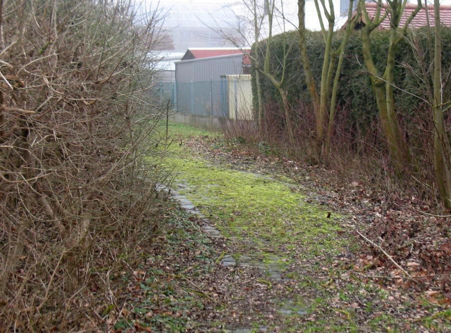 Die Vorsitzende des örtlichen Gartenbauvereins kritisierte den unkontrollierten Wildwuchs von Büschen und Gestrüpp sowie den starken Moosbefall des Weges auf dem Gelände der Ustersbacher Grundschule.