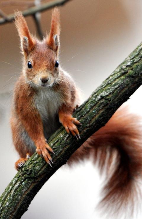 kempten eichhörnchen turnt durch fitnessstudio  polizei